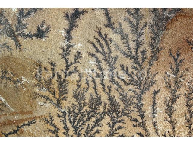 Gresie calcaroasă Terra capucino cu forme de pseudofosilie, formă tăiată (dimensionată)